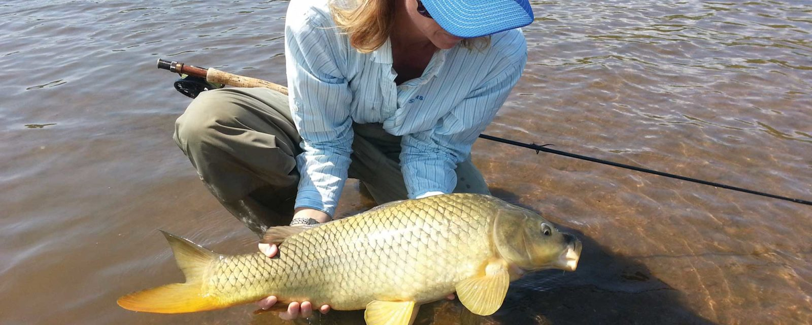 A woman holds and peers at a healthy looking common carp on the flats of a Colorado reservoir, with fly rod in lap.